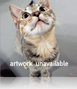 artwork unavailable bruce
